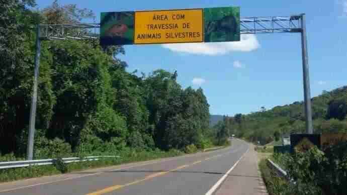 Rota do Sol terá bloqueios para monitoramento de animais silvestres | Foto: Daer / Divulgação / CP