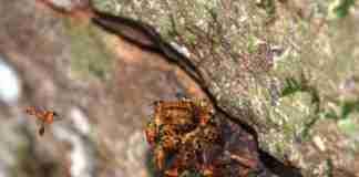 1º Encontro de Preservação dos Polinizadores do Rio Grande do Sul, que ocorre nos dias 2 e 3 de outubro