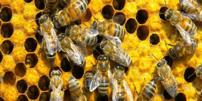Colméia de abelhas - APICULTURA RS