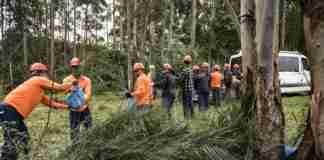 FOTOS FERNANDO DIAS/SEAPDR guarani-butiá 2-27P