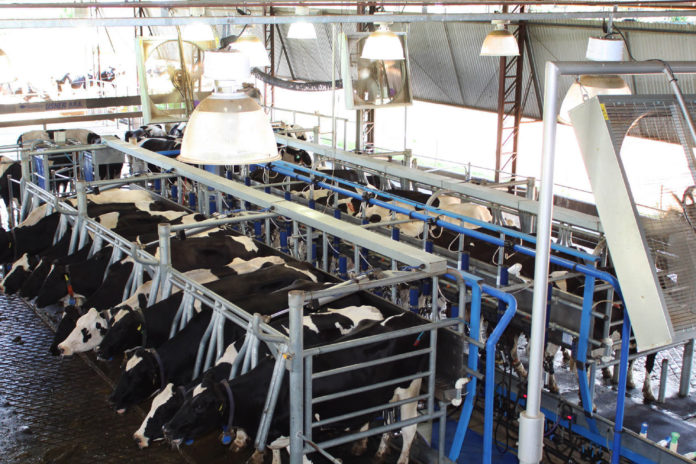 Ordenha e gado leiteiro. - Foto Jonas Oliveira - Ag. PR
