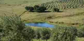 Produtores vão fazer o georreferenciamento dos olivais do RS para integrar ao cadastro de culturas sensíveis da Secretaria