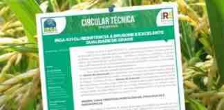 Enfoque é a cultivar IRGA 431 e a análise de sua resistência à brusone e a qualidade de grãos. - Foto: Raquel Flores/Irga