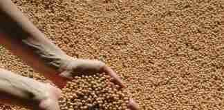 Informativo Conjuntural: Inicia plantio de soja no RS