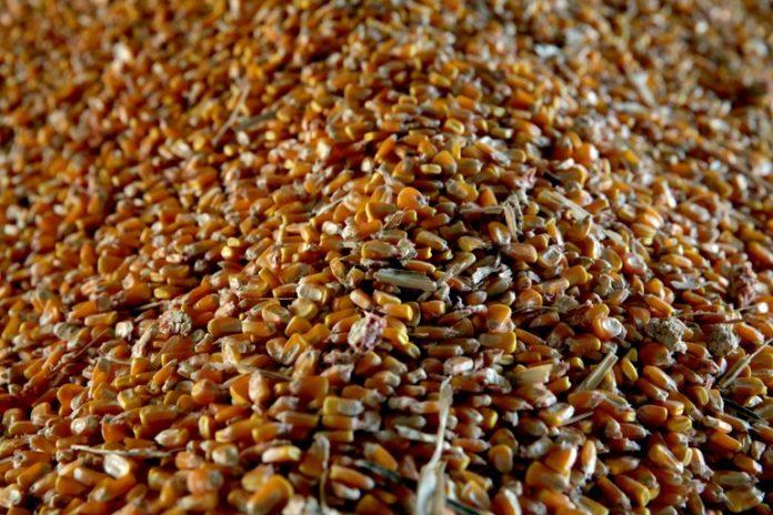 O estudo mostra que o produto da agropecuária teve incremento de 3,81% e o de insumos, 0,44%, no período analisado.
