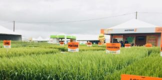 Nesta 16ª edição, que ocorre entre os dias 15 e 17 de outubro em Guarapuava (PR), soluções para a cultura do trigo estão entre os destaques.