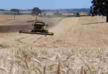 Levantamento divulgado pela FecoAgro/RS traz estimativa atualizada para as safras de soja e do milho no Rio Grande do Sul