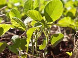 Preços dos fertilizantes tiveram impacto no resultado de setembro