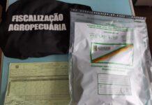 Envelopes com sementes desconhecidas foram apreendidos pela fiscalização da Secretaria da Agricultura | Foto: Divulgação/Seapdr