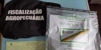 Envelopes com sementes desconhecidas foram apreendidos pela fiscalização da Secretaria da Agricultura   Foto: Divulgação/Seapdr
